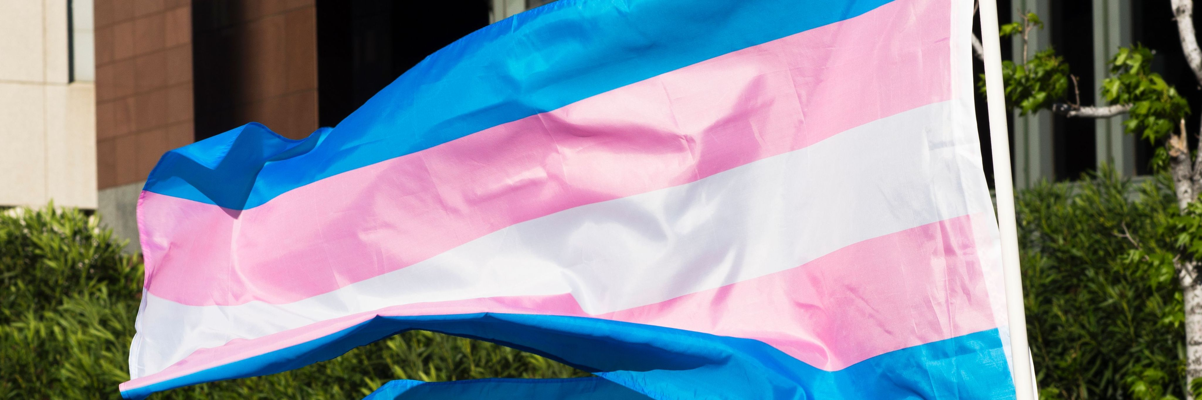Trans Flag Creator Worrying About Bernie Sanders Wrinkled Trans Flag Is Chickensh T Newnownext